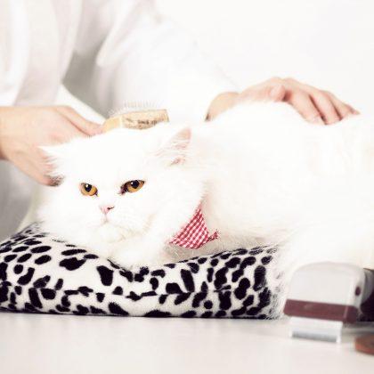Penjagaan dan Kesihatan Kucing