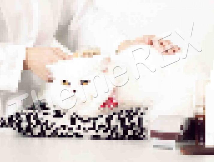 The Basics of Cat Health Care