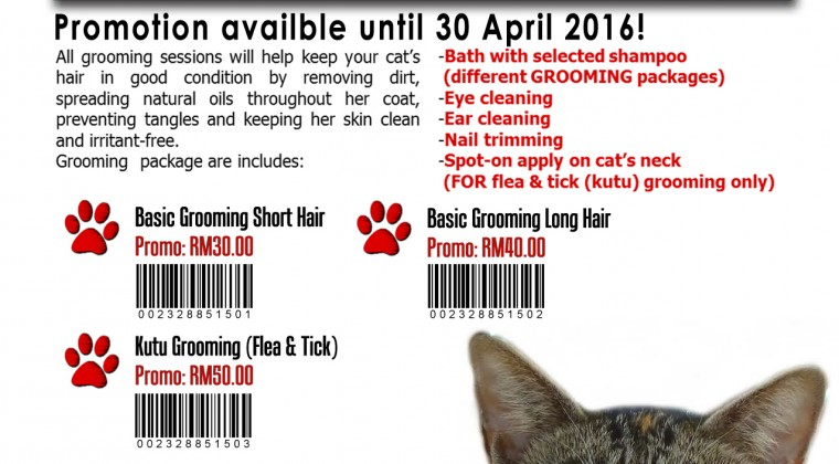 AprilFool Cat Grooming Promotion!